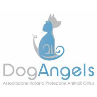 dog angels - espositore Miveg
