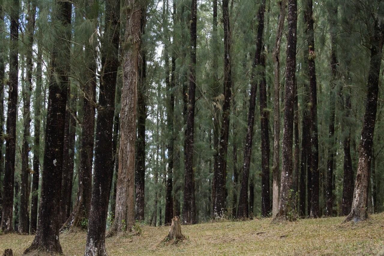 la foresta di Hambach al Miveg